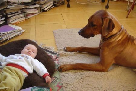 AMATONGA geht ganz in ihrer neuen Rolle als zuverläßiger Babysitter für Luna Luisa auf.