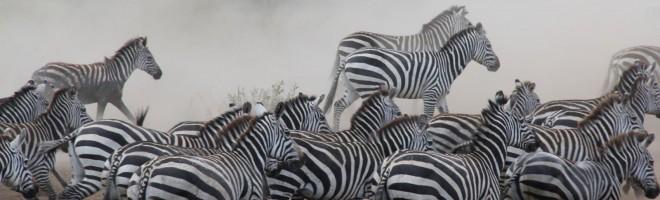 SAFARI in den Süden und Westen von Tanzania
