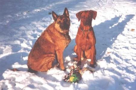 WANDA mit ihrer Freundin BINTI im Schnee.