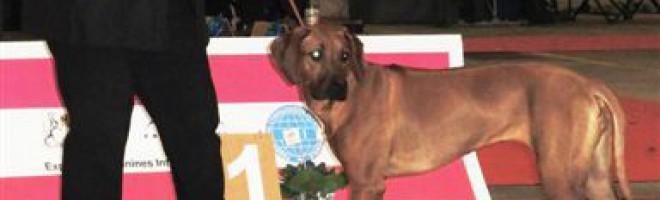 Daymani:  Miss Fribourg 2015…!