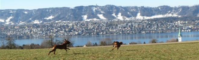 Hundeparadies mit See- und Bergsicht