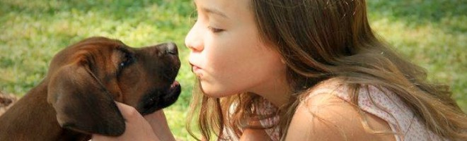 Hunde erkennen unsere Gefühle  – ja was denn sonst?