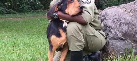 """Hundepaten gesucht: """"Unser"""" Congohound Furaha stellt sich vor"""