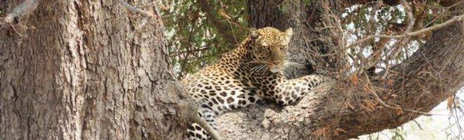 Chui kam nachts um eins / Safari-Notizen aus Tanzania (VII)