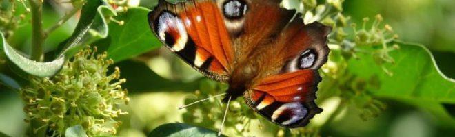 Flügelt ein kleiner Falter … / Augenblicksblinken aus dem Horngarten