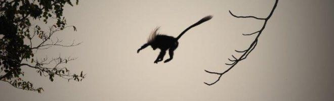 Kommt ein Affe geflogen…. / Safari-Notizen aus Tanzania (VI)