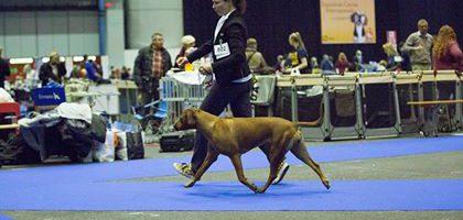 ECI Genève: 3 Tage, 3 Hunde und 4 Championtitel
