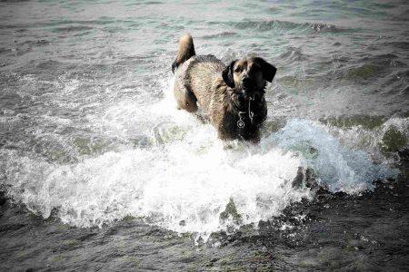 Sisi liebt es, im Wasser zu planschen und auch zu schwimmen.