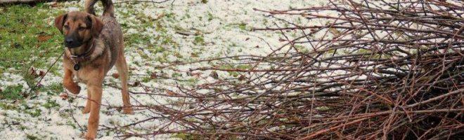 Sturm Burglind – unsere Hunde räumen den Garten auf