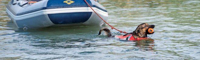 Sisi trainiert als Wasserrettungshund