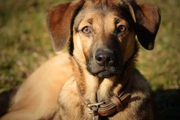 Junghündin Sisi Sultanine vom Bunten Hundehof