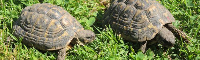 Schildkröten-Kinder suchen ein Plätzli