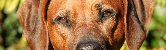 Frühling 2021: Die Kennel UMLANI und MAKOLOLO freuen sich …