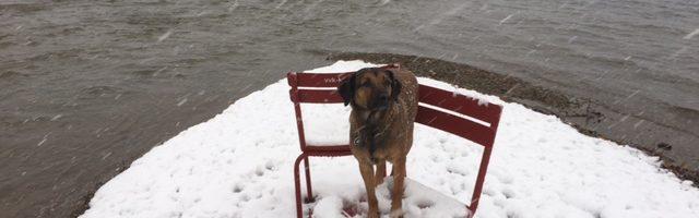 Sisi freut sich über den Schnee